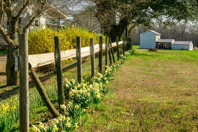 Farm Springtime Fence