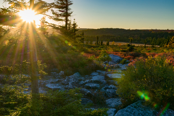 Dolly Sods WV