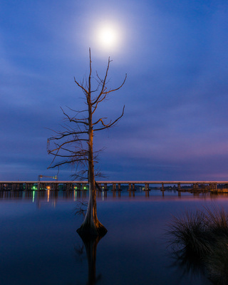 Cypress Tree Moon
